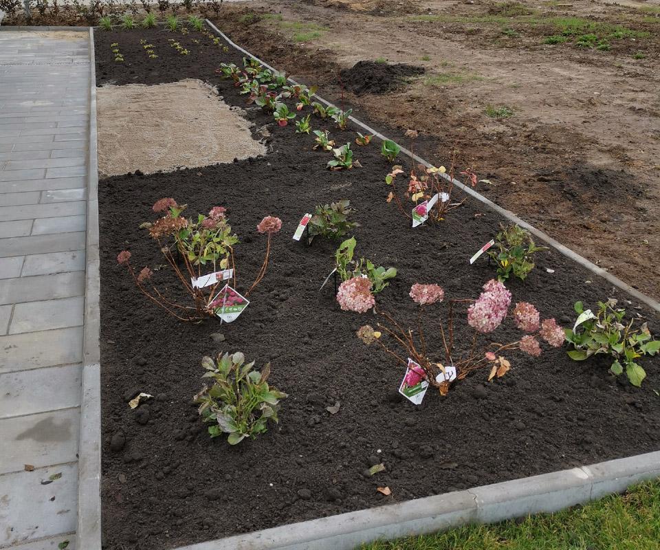 Anlaeg af blomster og planter